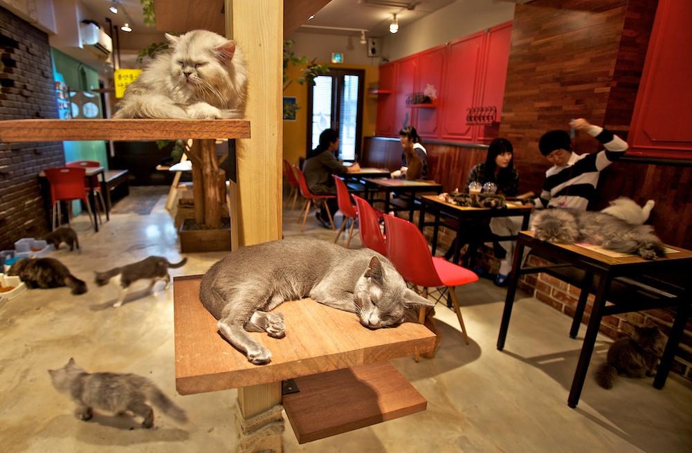 Japonya Neko Cafe